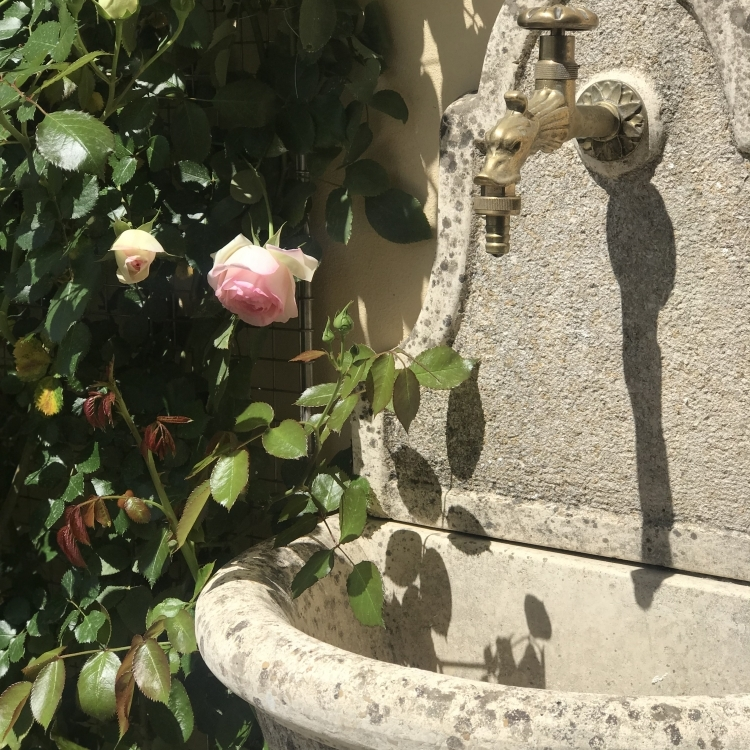 Our beloved Roses and Fountain