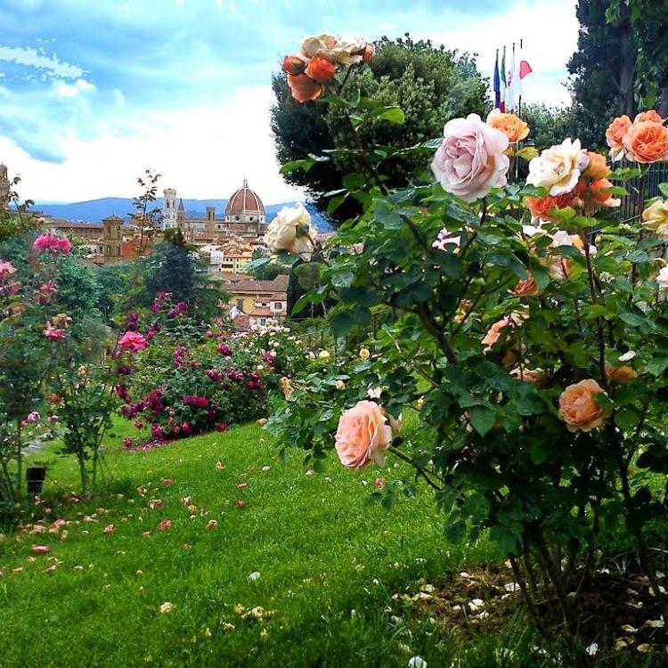 The Rose Garden at Piazzale Michelangelo